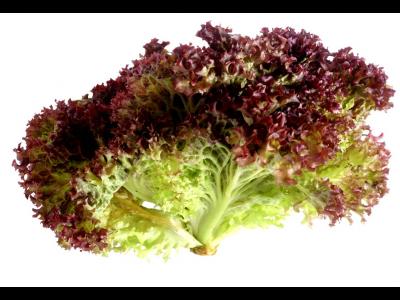 Lollo Rosso saláta 200g
