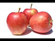 Gála alma lédig