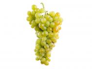 Fehér szőlő muskotályos lédig
