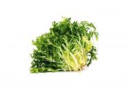 Saláta Frisee db